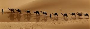 10 camels
